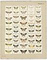 MA I437611 TePapa Plate-XII-The-butterflies full.jpg