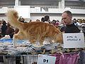 MTP Cat Show 2230073.JPG