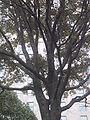 Madison tree.JPG