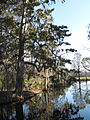 Magnolia Plantation and Gardens - Charleston, South Carolina (8555379253).jpg