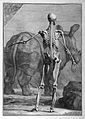 Male skeleton with a rhinoceros Wellcome L0023550.jpg