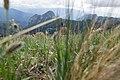 Maly Tkhach, Adygea, Малый Тхач, разнотравье ранним летом, Адыгея.jpg
