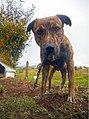 Marinilla Colombia - Street Dogs Perros Callejeros 01.jpg