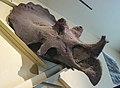 Maximum Triceratops.jpg