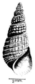 Melanoides victoriae shell.png