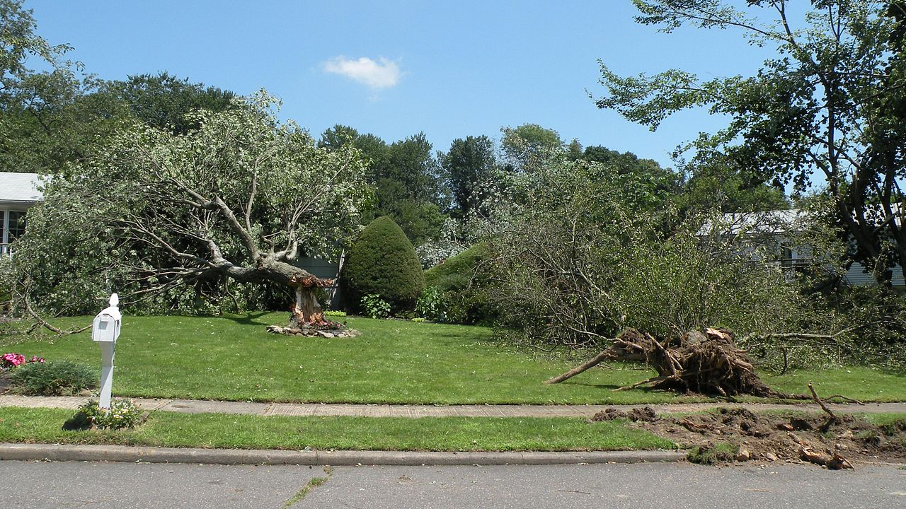 https://upload.wikimedia.org/wikipedia/commons/thumb/0/00/Milford%2C_CT_2009-07-31_wind_damage_4.jpg/1280px-Milford%2C_CT_2009-07-31_wind_damage_4.jpg