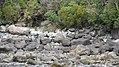 Milford Sound, South Island (483063) (9482410017).jpg