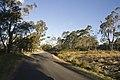 Mittagong NSW 2575, Australia - panoramio (3).jpg