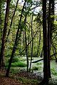 Moorgebiet im Serrahner-Wald.jpg