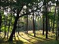 Morning - panoramio - Wolodymyr Lavrynenko.jpg