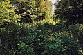 Moscow, Losiny Ostrov forest (21256129691).jpg