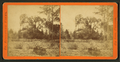 Moss tree, from Robert N. Dennis collection of stereoscopic views.png