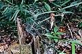 Mount-Silam Lahad-Datu Sabah Spiderweb-01.jpg