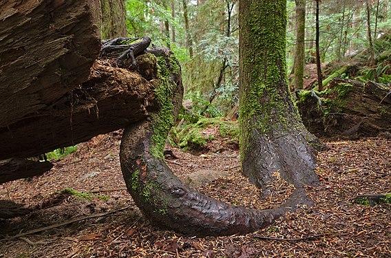 Mount Seymour Provincial Park, BC (DSCF8496).jpg