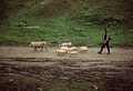 Musa - Gura Teghii - pig herder.jpg