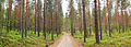 Muuramenharju recreational route2.jpg