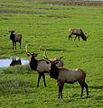My Public Lands Roadtrip- Dean Creek Elk Viewing Area in Oregon (19096532885).jpg