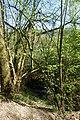 NSG Bildchen Wald 3.jpg