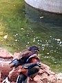 NandanKanan Birds.jpg