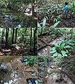 Nanosaphes (10.3897-zookeys.768.24423) Figure 20.jpg