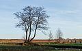 Nationaal Park Weerribben-Wieden. Meerstammige els (Alnus) 02.jpg