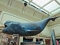 National Museum of Natural History, Washington, D.C. (2013) - 02.JPG