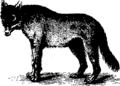 Natural history Fleuron T077051-13.png
