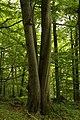Nature reserve Žižkův vrch in summer 2012 (20).JPG