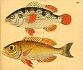 Naturgeschichte in Bildern mit erläuterndem Text (Taf. CIII) (6058675951).jpg