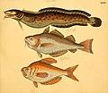 Naturgeschichte in Bildern mit erläuterndem Text (Taf. XXXI) (6059208626).jpg