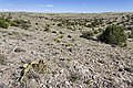 Near Archuleta Creek - Flickr - aspidoscelis.jpg