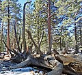Near San Jacinto Peak, CA 2-7-14c (16482690262).jpg