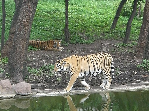 Nehru Zoological Park2 Aug2013
