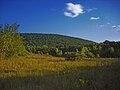 Nescopeck State Park Brush.jpg