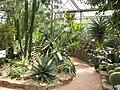 Neuer Botanischer Garten Marburg - Sukkulentenhaus 002.jpg