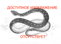 No image available snake ru.png