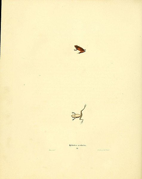 File:North American herpetology, or, A description of the reptiles inhabiting the United States (6076444868).jpg