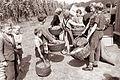 Obiranje hmelja v Savinjski dolini 1961 (12).jpg