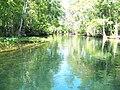Ocala Silver River01.jpg