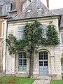 Old pear tree.jpg