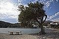 Olive at Portlligat.jpg