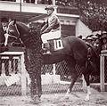 Omar Khayyam (horse).jpg