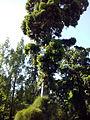 Orto botanico di Napoli 120.jpg