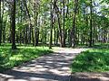 Ostroleka-park6.jpg