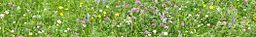 Outer Hebrides banner Machair Flowers.JPG