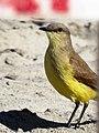 Pássaro - panoramio (6).jpg