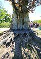 Pücklersche Blutbuche Muskau-Park Bad Muskau...2H1A1317WI.jpg