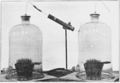 PSM V74 D231 Plant growth retardation by radioactive air in a bell jar.png