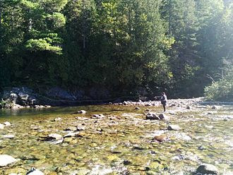 Atlantic salmon - An Atlantic Salmon Recreational Fishermen in the Pabos River of Quebec.