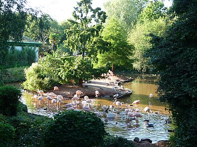 Paignton , Paignton Zoo, Flamingo Lake - geograph.org.uk - 1485186.jpg